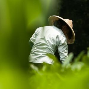 GreenTea Hangzhou